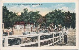 Dinner Hour, Ostrich Farm, Jacksonville, FL Florida - Early 1900's Postcard