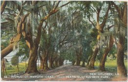 Avenue of Mammoth Oaks, Audubon Park, New Orleans, LA 1909 Postcard