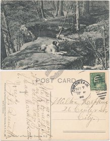 Dog, The Rocks at Pine Crest, Oneonta, NY New York 1909 Postcard