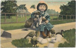 Baby Ostriches, Girl Holding Dog, Florida FL - Early 1900's Postcard