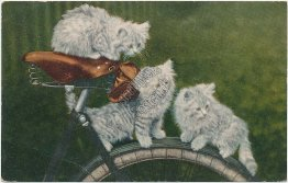 3 Cats on top of Bicycle Seat, Cycling - 1911 Postcard