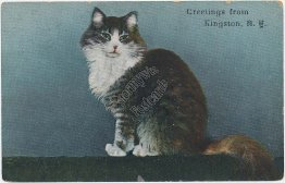 Cat, Greetings from Kingston, NY New York 1909 Postcard