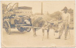 Ox Drawn Wagon, Cart - Early 1900's Real Photo RP Postcard
