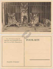 Bengal Tiger, Circus Willy Hagenbeck, Hamburg, Germany - Early 1900's Postcard