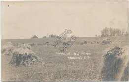 Farm of W. J. Wynn, Iroquois, SD South Dakota - Early 1900's RP Photo Postcard