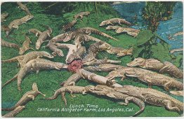 Lunch Time, Alligator Farm, Los Angeles, CA California - Early 1900's Postcard