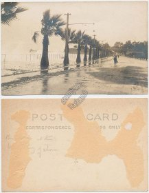 Beach, Palms, Tropical Storm, Florida ? - Early 1900's - Real Photo RP Postcard