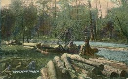 Southern Timber - Early 1900's Logging Postcard