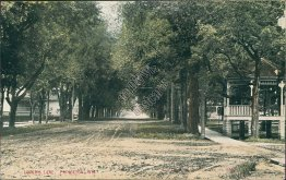 Lovers Lane, Princeton, WI Wisconsin - Early 1900's Postcard