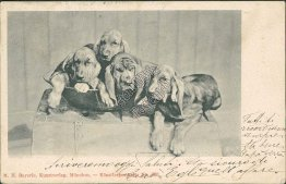 4 Bloodhound Dogs, Munich, Germany - Early 19000's Postcard