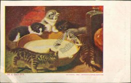 Cats Around a Bowl, In a Bad Fix Pre-1907 Postcard