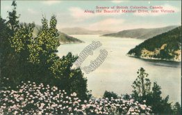Malahat Drive, near Victoria, British Columbia BC, Canada Early 1900's Postcard