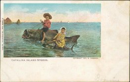 Kids Riding Giant Fish, Catalina Island Steeds, CA 1901 Postcard