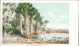 A Florida Landscape, FL Pre-1907 DETROIT PHOTOGRAPHIC CO. Postcard