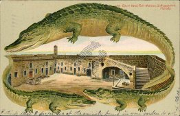 Court Yard, Fort Marion, St. Augustine FL Florida ALLIGATOR BORDER S551 Postcard