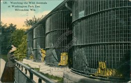 Wild Animals, Washington Park Zoo, Milwaukee, WI Wisconsin - 1912 Postcard