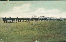 A 16 Horse Freight Outfit, Cartwright, ND - 1908 Postcard