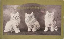Three Cats, Looking for Something to Drop - 1910 Postcard