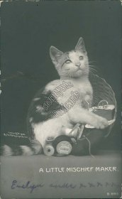 Cat, A Little Mischeif Maker Pre-1907 ROTOGRAPH Real Photo RP Postcard