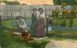 Tourist Driving Alligator, Jacksonville, FL Florida - Early 1900's Postcard