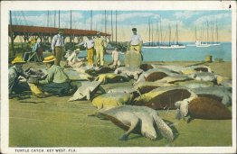 Turtle Catch, Key West, FL Florida - Early 1900's Postcard