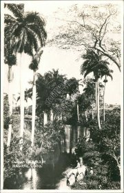 Cuban Landscape, Havana, CUBA - Early Real Photo RP Postcard