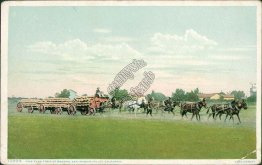 Five Team Train, Horse Drawn Wagons, San Joaquin Valley, CA Early Postcard