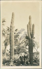 2 Women Posing Next to Catci, Cactus, Phoenix, AZ - Early 1900's Photo