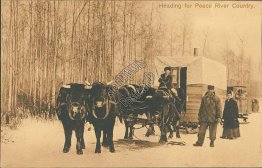 Heading for Peace River Country, Calgary, Alberta AB - Early 1900's Postcard