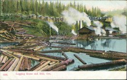 Logging Scene and Mill, OR - Early 1900's Postcard