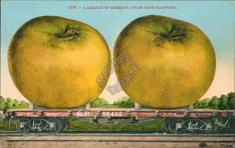 Carload of Mammoth Apples, Southern Pacific R.R., California CA Postcard