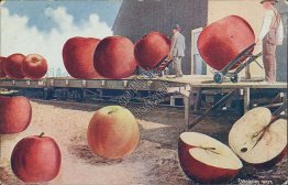 Hauling Giant Apples, Spokane, WA Washington - Exaggeration Early Postcard