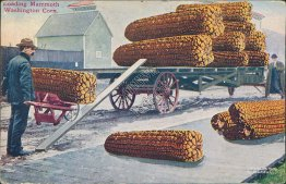 Loading Mammouth Washington Corn, Spokane, WA - Exaggeration Postcard
