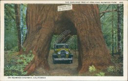 Car, Coolidge Tree, Redwook Park Highway, CA California - Early Postcard