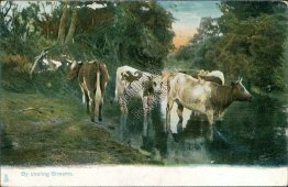 Cows, Cattle, By Cooling Streams - Early 1900's TUCK Postcard