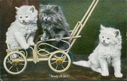 Cats on Cart, Ready to Go - Early 1900's Postcard