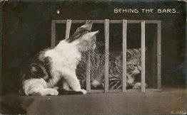 Cats, Behind the Bars - Early 1900's Real Photo RP Postcard