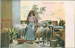 Maltese Milk Vendor, Goats, Malta - Early 1900's Postcard
