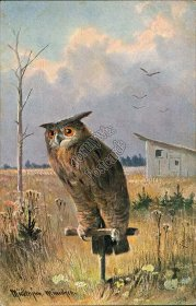 Owl, Country Scene - Early 1900's Artist Signed Postcard