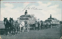 Horse Drawn Wagon, Hauling Wood to Market, OR Oregon - Early 1900's Postcard